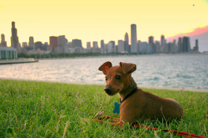 Dog Friendly Chicago Establishments? Plan a Date with your Best Friend