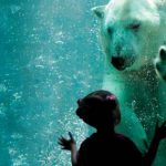 Brookfield Zoo – One Of Chicago's Greatest Attractions