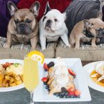 Dog Friendly Chicago Restaurants – Dine With Your Pooch