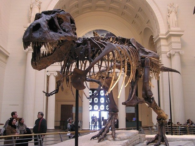 Top 10 Things To See At The Field Museum of Natural History
