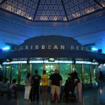 Top 10 Things To Do At Shedd Aquarium Chicago