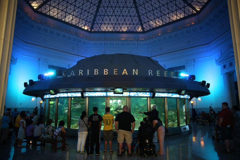 top 10 things to do at shedd aquarium chicago the chicago traveler